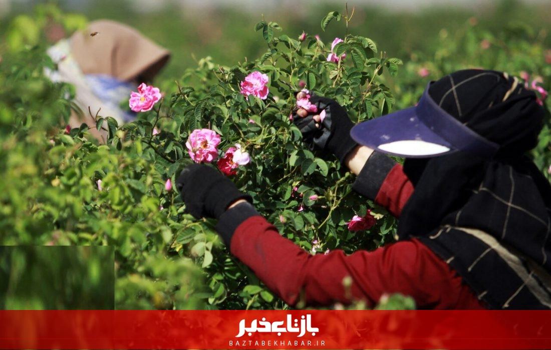 حضور زنان روستایی قم در فعالیتهای کشاورزی گسترش مییابد