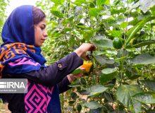 روستاییان خراسان شمالی بیش از ۹۶۷ میلیارد ریال وام کارآفرینی گرفتند