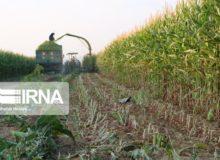 کشاورزان چهارمحال و بختیاری محصولات خود را سریعتر جمعآوری کنند