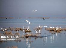 دلیل اولیه و اصلی مهاجرت پرندگان چیست؟