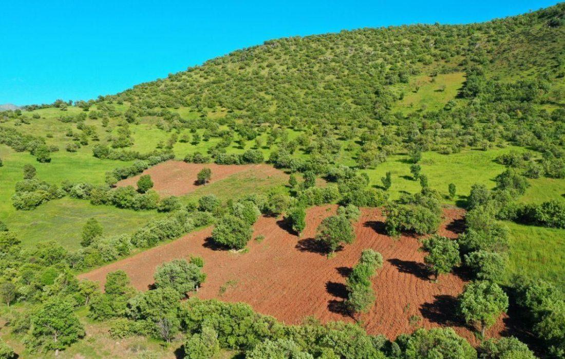 طرح کاداستر در اراضی لرستان تا پایان امسال بطور کامل اجرا میشود