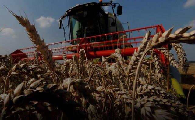 افزایش خرید گندم ایران از بازار جهانی